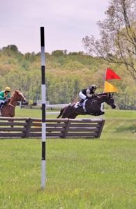 horsesjumping