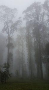 A misty Kinglake morning.