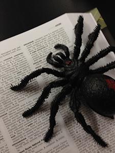spiderpic